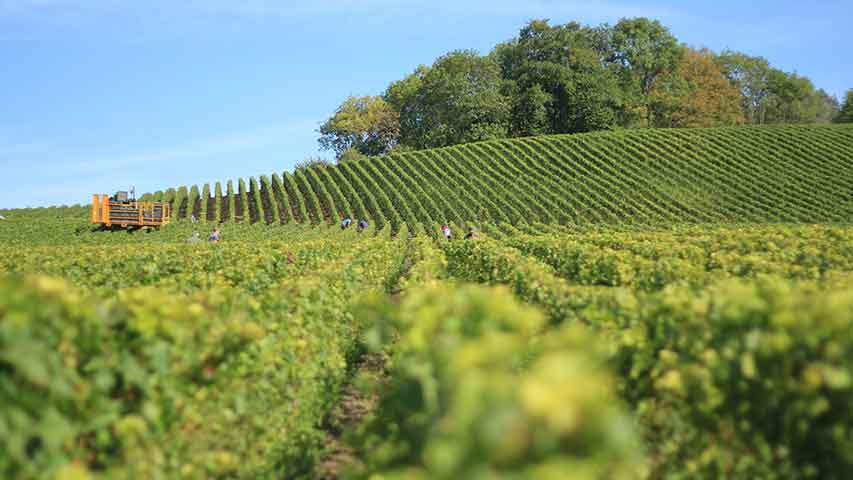 Best Winery Tours To Yarra Valley